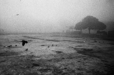 Terrain vague avec brume et corbeau.
