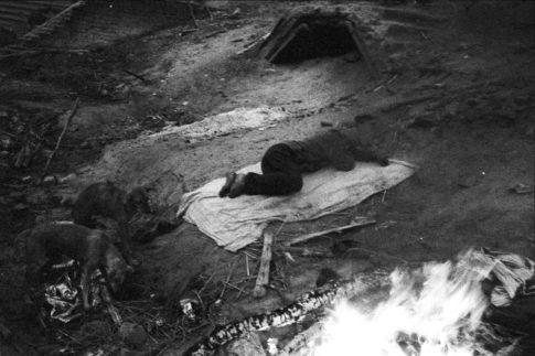 Dormeur et chiens sur le champ des crémations.