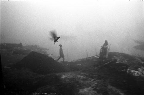 Oiseau et silhouettes au bord du Gange.
